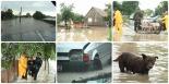 colaj-inundatii-gataia